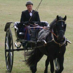 Carruajes para caballos