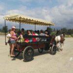 Oferta Carruaje especiales vagoneta turismo